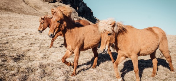 horse grass